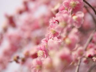 梅の花・春の誘い