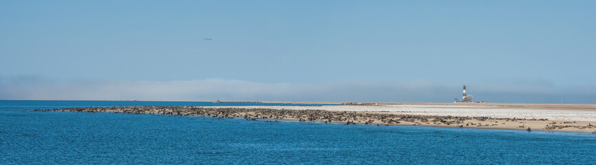 colony of sea lions and lighthouse in Namibia