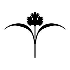 Cilantro (organic microgreen)