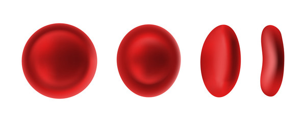 Erythrocyte or red blood cells isolated on white