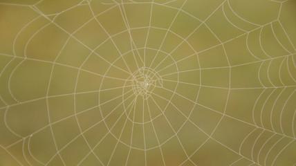 Rundes Spinnennetz