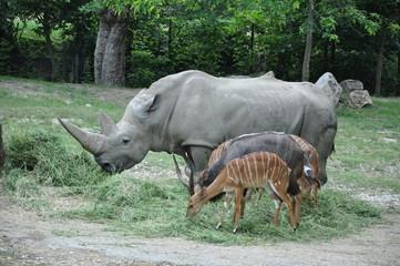 Rhino and other wild animals