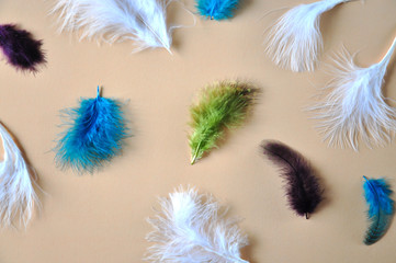 Beautiful Feathers on Pastel Background