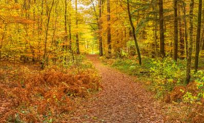 Bunter Herbstwald im Spätherbst mit Fußweg in weichem Licht - Colourful autumn forest in late autumn with footpath in soft light