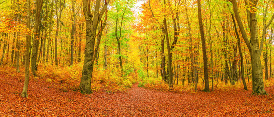 Spätherbst großes buntes Waldpanorama mit Fußweg - Late autumn large colorful forest panorama with footpath