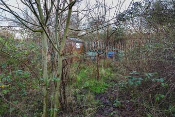 Neglect, an overgrown garden area Wall mural