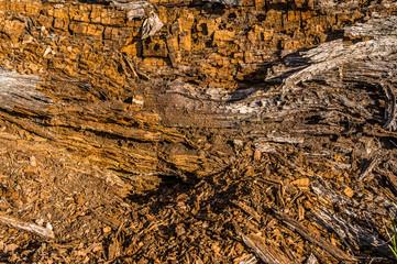 Totholz, totes, abgestorbenes und verrottendes Holz von Baumstämmen als Lebensraum für Tiere
