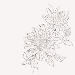 Vector dahlia flower. Autumn flowers bouquet.  Element for design. Sketch hand-drawn contour lines and strokes.