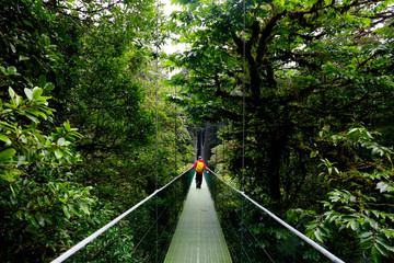 A man walking on suspension bridge in cloud forest