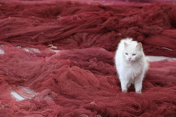 A white cat among red fishing nets.