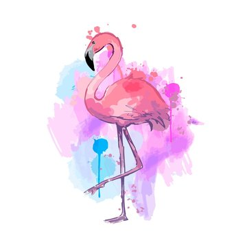Pink watercolor flamingo. Beautiful vector illustration isolated on white background.