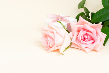 Two pink blooming roses with gift box and copy space