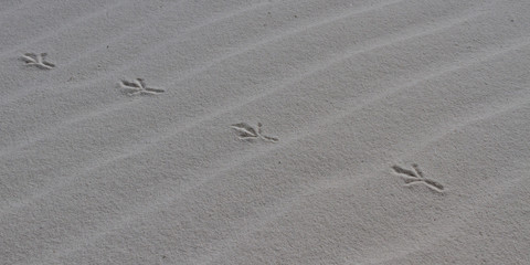 Bird tracks in white sand