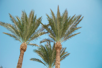 palm tree on sunny day with blue sky background.