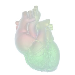 Abstract illustration of anatomical human heart. 3d render