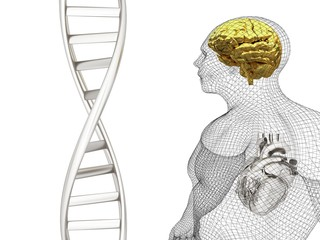 3D medical background with DNA strands and wire human body model with heart and brain in x-ray. 3d render
