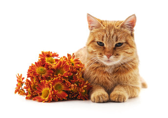 Brown cat and bouquet of chrysanthemums.