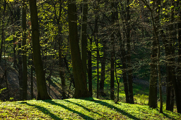 Background of green forest trunks, spring awakening