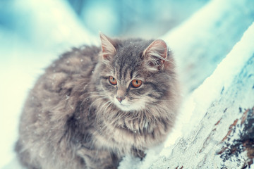 Gray Siberian cat sits on a tree in the winter orchard