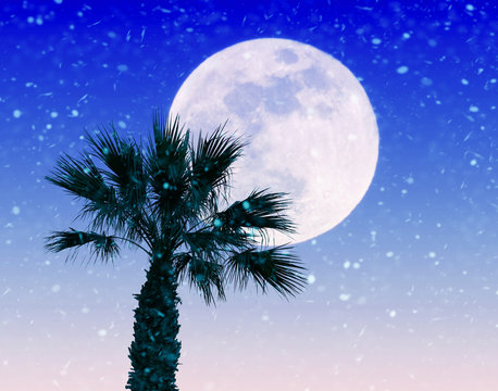 Imaginary landscape with giant full moon and palm tree under a heavy snowstorm