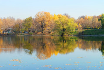 Landscape park with a pond golden autumn during leaf fall. Trees on the shore are reflected in the water.