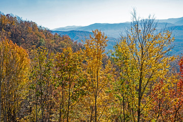 Fall colors in the Great Smoky Mountains National Park.