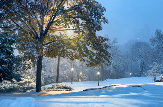 Winter landscape in Central Park. New York City. USA