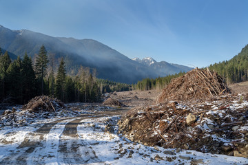 Beautiful Forest and Mountain Landscape with Logging Clear Cuts