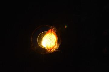 #枯れ葉#ライト#落ち葉