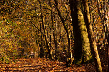 Dutch Forest Path in Autumn 04