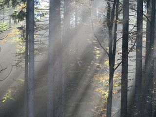Sonnenstrahlen im Nebel