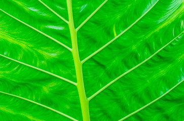 Green leaf with details of leaves for background.