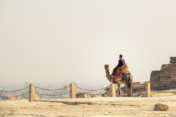 a young man sitting on a camel, looking from the Giza to Cairo