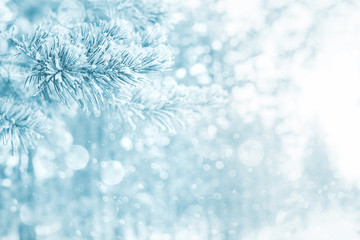 Bright winter background with snow-covered pine trees. Natural festive background.
