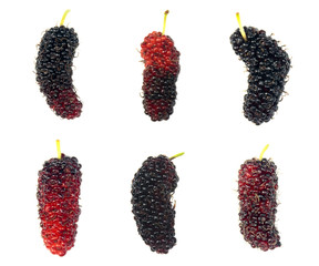 Mulberries fruit  on white background. Fresh mulberry.