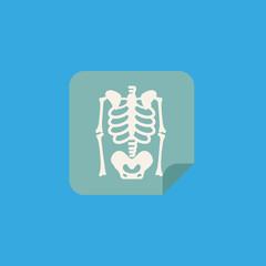 medical skeleton picture icon. flat design