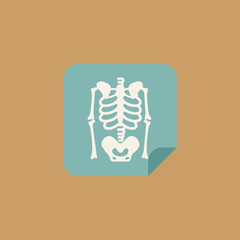 medical skeleton picture icon. flat design