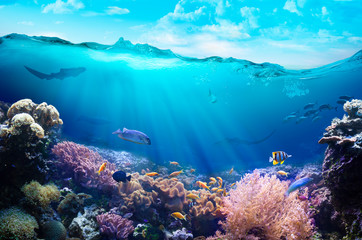 Photo sur Toile Recifs coralliens Underwater view of the coral reef.