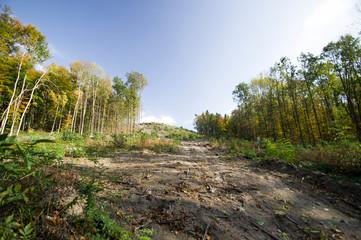 Waldrodung für Straßenbau in Pirna
