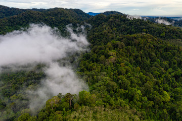Aerial drone view of mist and fog forming over a tropical rainforest in Asia