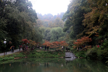 The maple leaves China