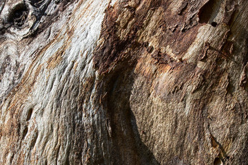 bright not smooth surface of old forest tree close-up natural background