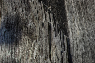mysterious gray texture of old wood closeup with black patterns natural background