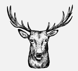 Sketch of deer. Hand drawn illustration converted to vector