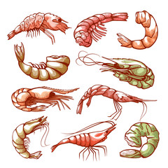 Shrimp hand drawn sea and seafood symbol