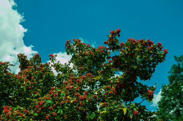 tree with green leaves and blue sky