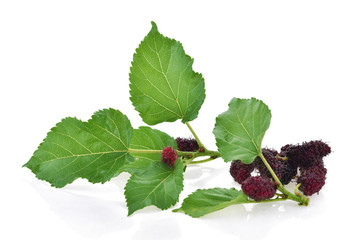 Mulberry with leaf isolated on white background.