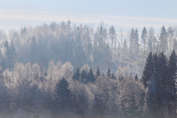 First frost in the forest. Belarusian landscape. Beginning of winter.