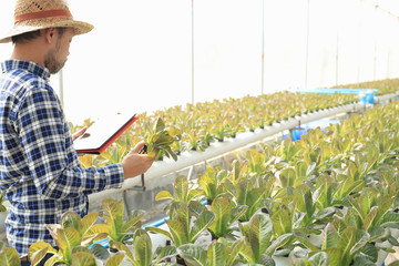 Hydroponics vegetable growers use tablet to track plant growth. Application of modern technology in agricultural activities.