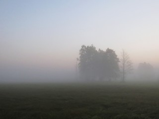 Beautiful Nature Wild Landscape During Sunrise with Foggy Mist